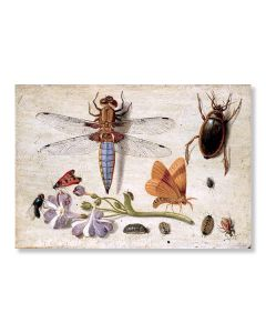 Cockchafer & Other Insects Greeting Card