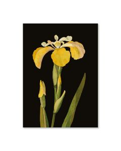 Yellow Iris Mini Notepad