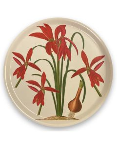 Dillenius Lily Round Tray